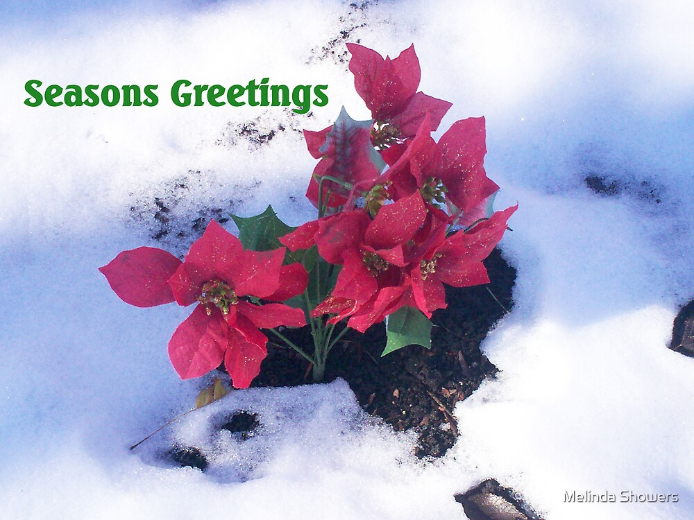 Seasons Greetings by Melinda Showers