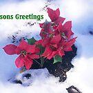 Seasons Greetings by Melinda Showers