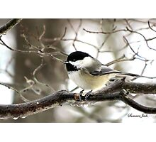 I Spy a January Thaw ~ Chickadee   Photographic Print