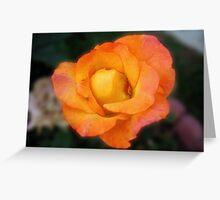 Late Bloom Greeting Card