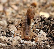 Scorpion - Locked & Loaded by Daniel J. McCauley IV