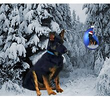 GERMAN SHEPHERD OUT IN SNOW PICTURE Photographic Print