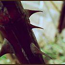 Thorns by Bryan Davidson