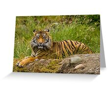 A Sumatran Tiger Rests in the Grass Greeting Card