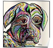 Colorful Boxer Poster