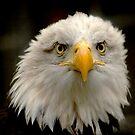 Sea Eagle by Jacky