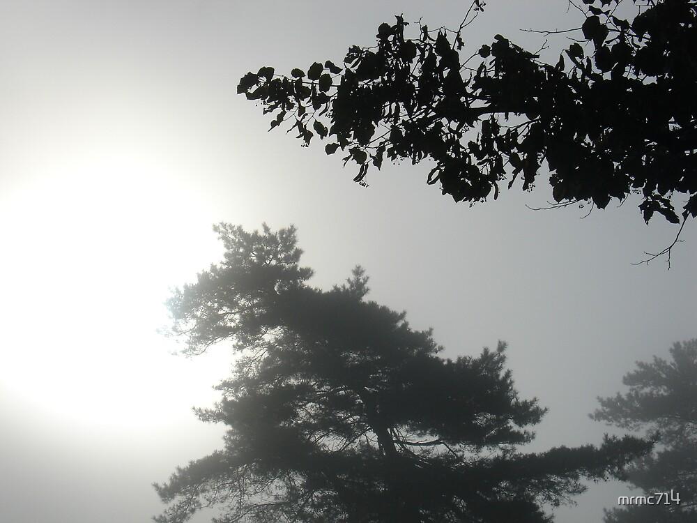 misty by mrmc714