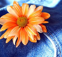 Blue Jeans and Daisy's!!!! by AngelPhotozzz