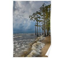 Cypress trees on the beach Poster