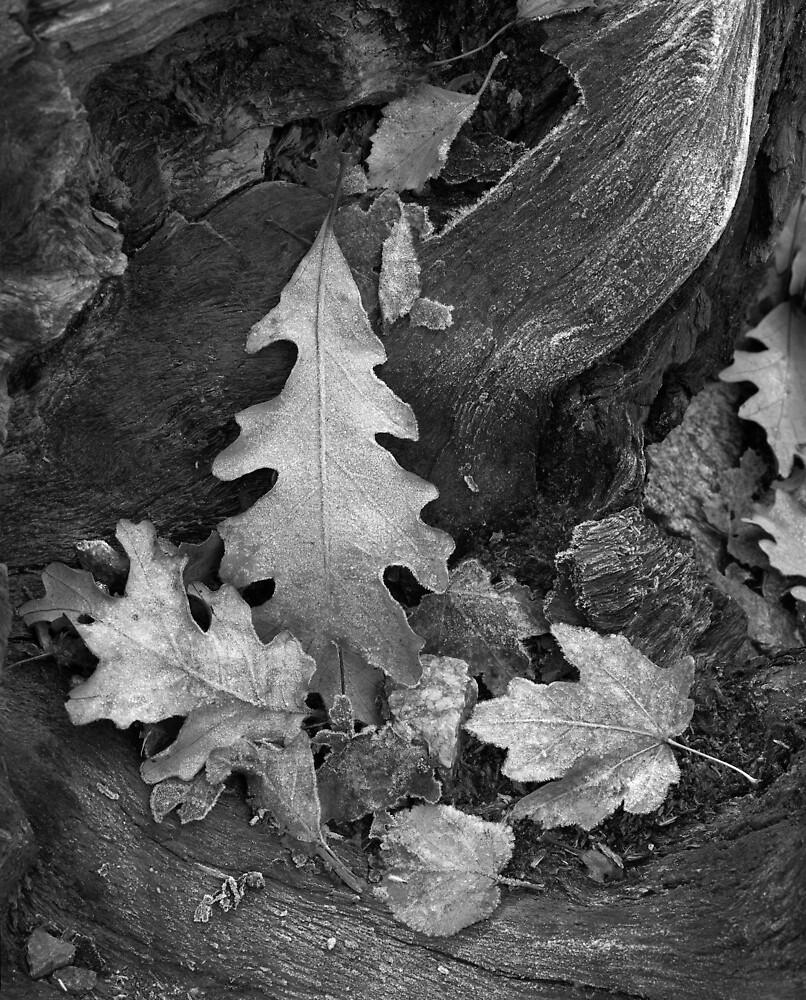 Leaves by mymamiya