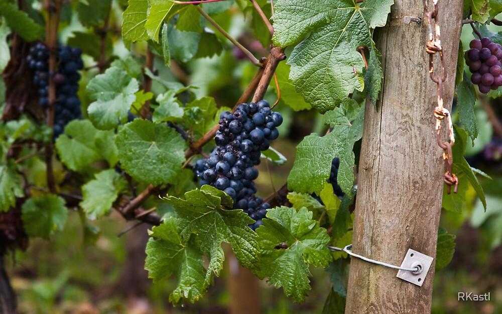 Grape Harvest #2 by RKastl