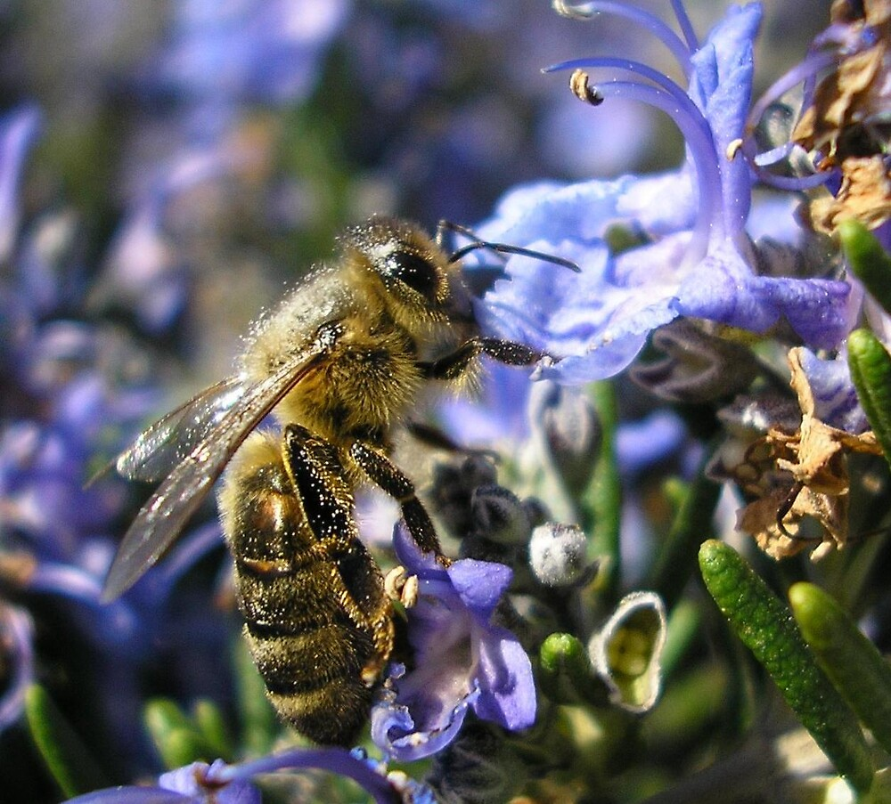 Working Bee. by terryk