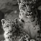 Mother & Daughter White Himalayan Snow Leopards by Robert  Anthony