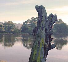Morning Light - Lake Shore Tree Stump by photoartful