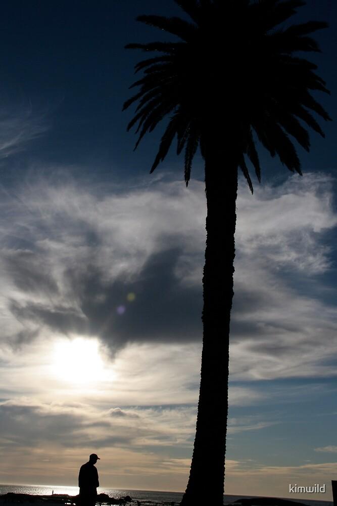 Palm Silhouette by kimwild