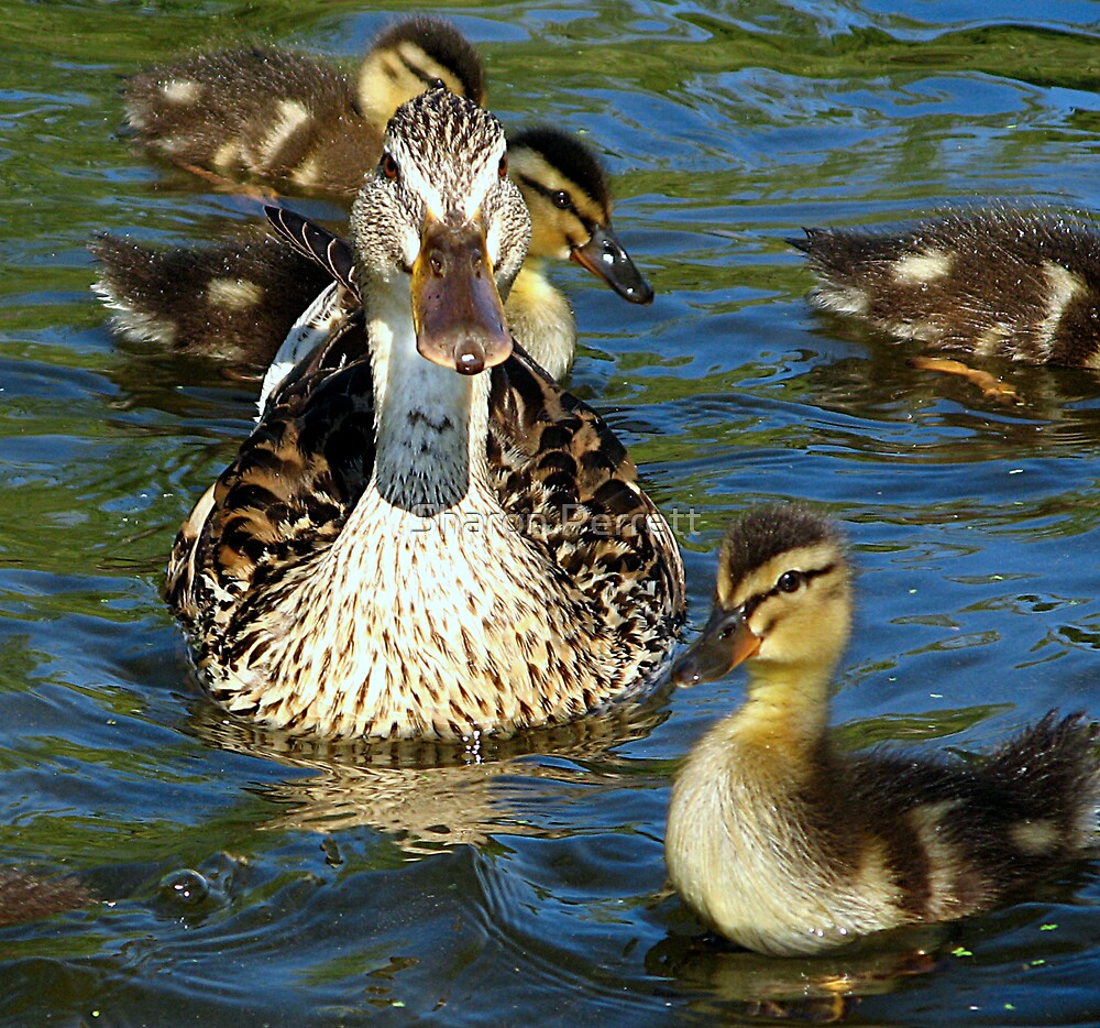 Family Outing by Sharon Perrett