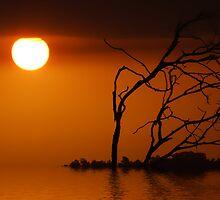 SUNREALISM SERIES by webgrrl
