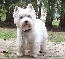 Westies are the besties by MarianBendeth