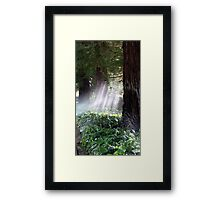 Mystical Moment with the Redwoods Framed Print