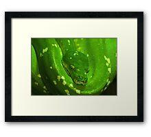 Green Tree Python Framed Print
