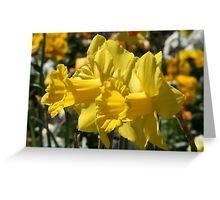 Smiling Daffodils Greeting Card