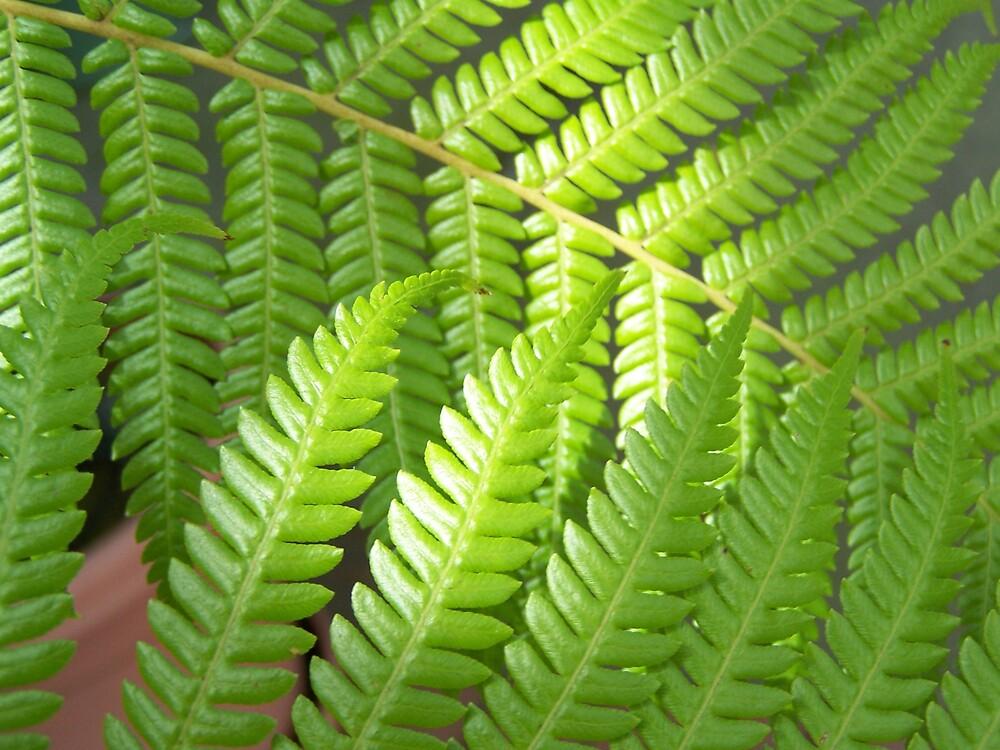Ferns by montana16