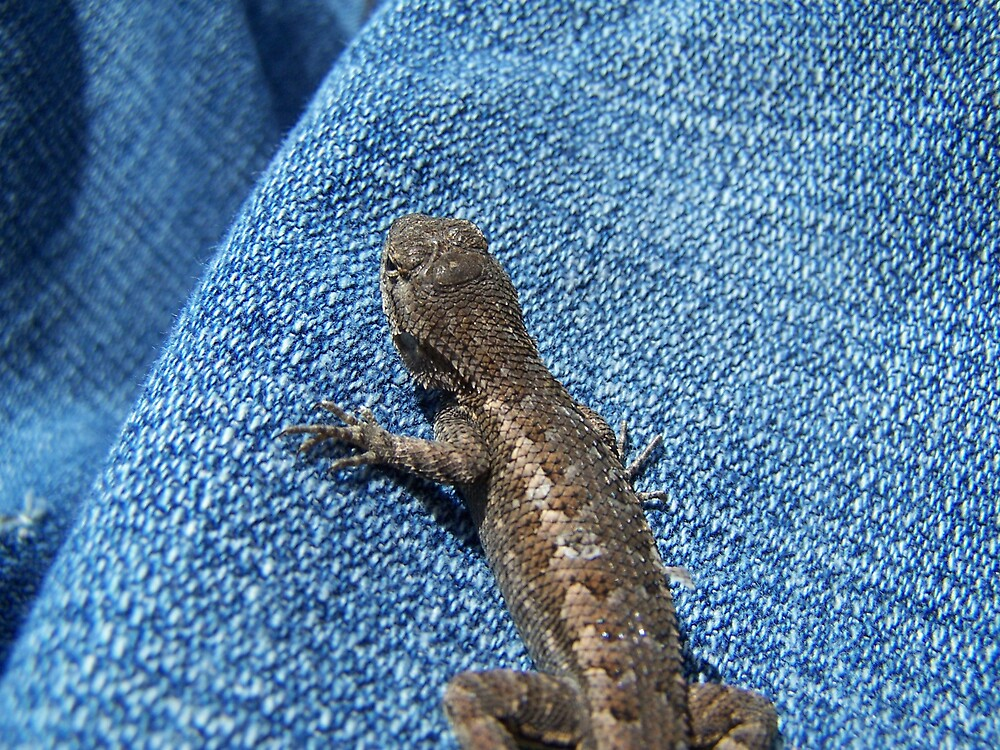 Lizard and Jeans by montana16