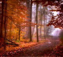 Foggy Fall wonder land by Umesh Bhatt