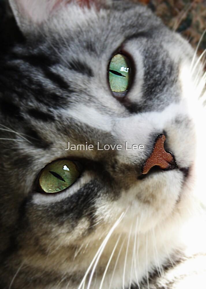 Sambuca by Jamie Lee
