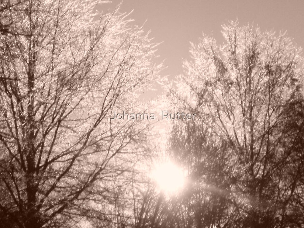 Trees with Ice by Johanna  Rutter