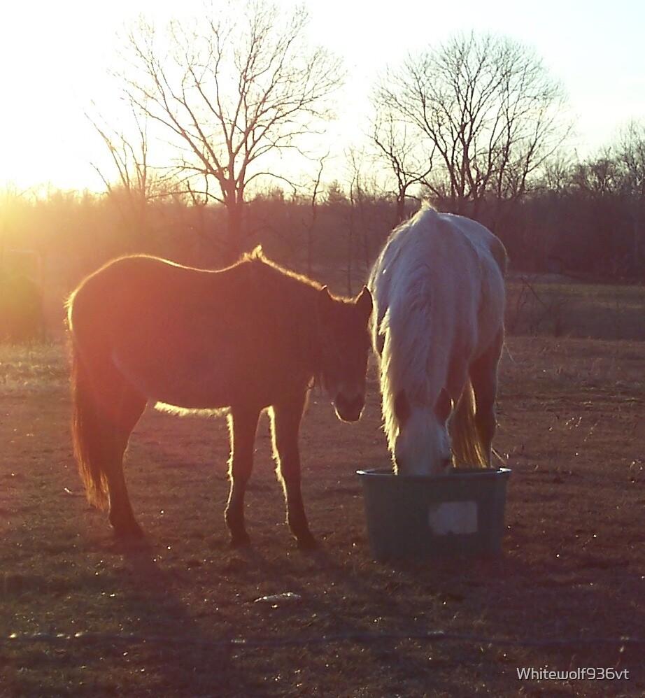 Morning Feeding by Whitewolf936vt