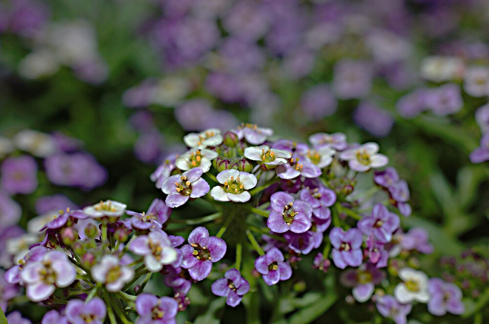 Tiny flowers... by David  Hall