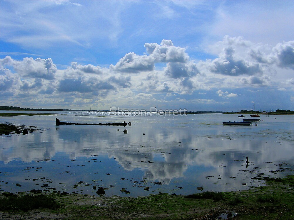Highly Reflective by Sharon Perrett
