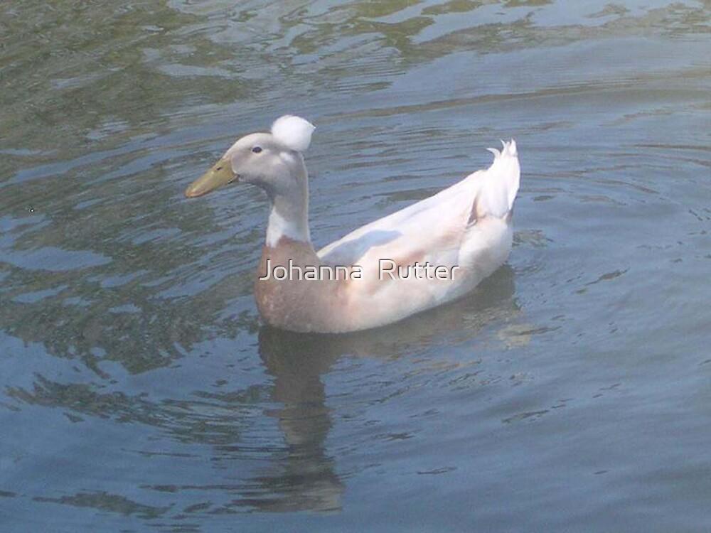 duck in water by Johanna  Rutter