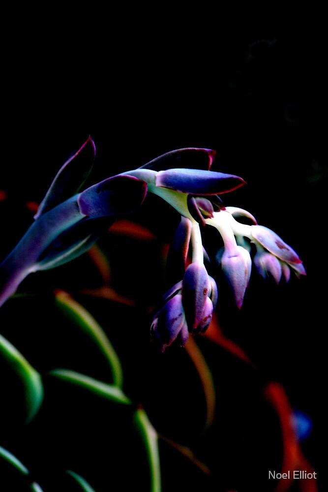 Flower #7 by Noel Elliot
