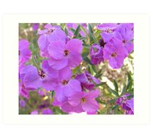 Lilac colored flowers Art Print