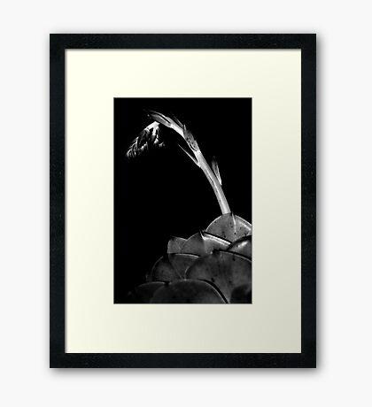 Plant #3 Framed Print