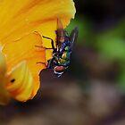 Fly by David  Hall