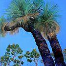 Grass Tree Cunningham's Gap Queensland  by Virginia McGowan