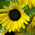 Sunny Sun Flower and Friends by Mary Lake