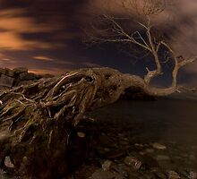 Dark Tree by Will Pursell