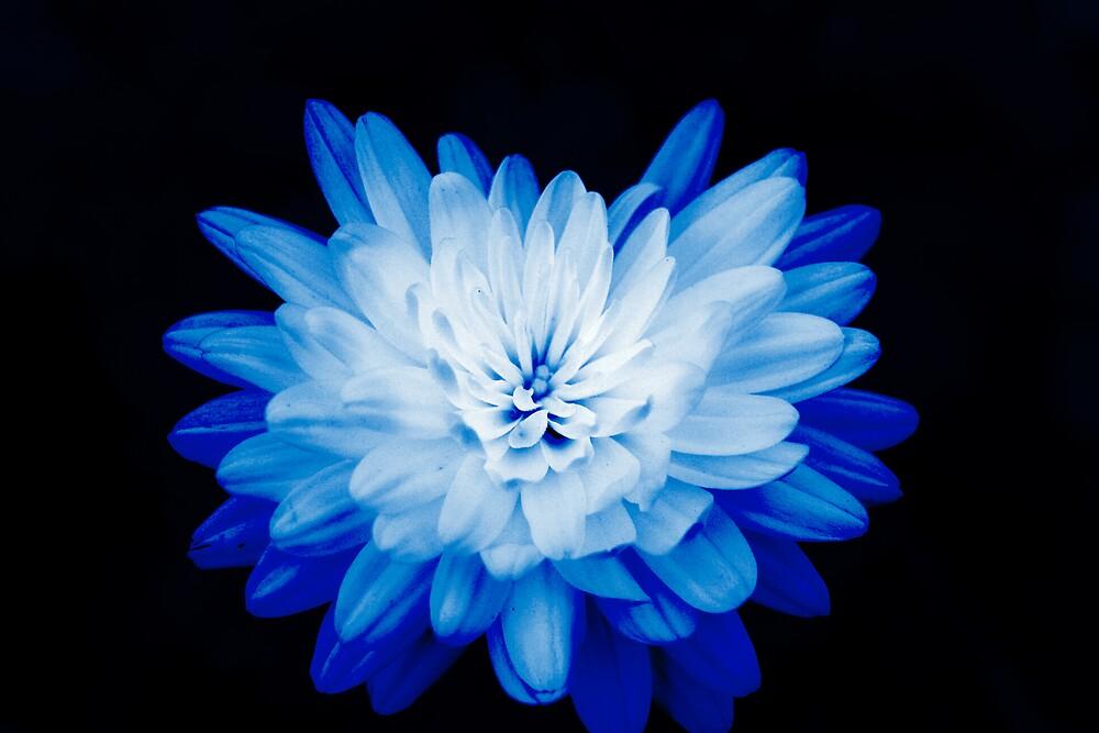 Blue on Black by vonnie1989