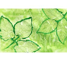 Green Painted Texture with Leaves Photographic Print