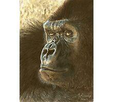Gorilla in color pencil Photographic Print