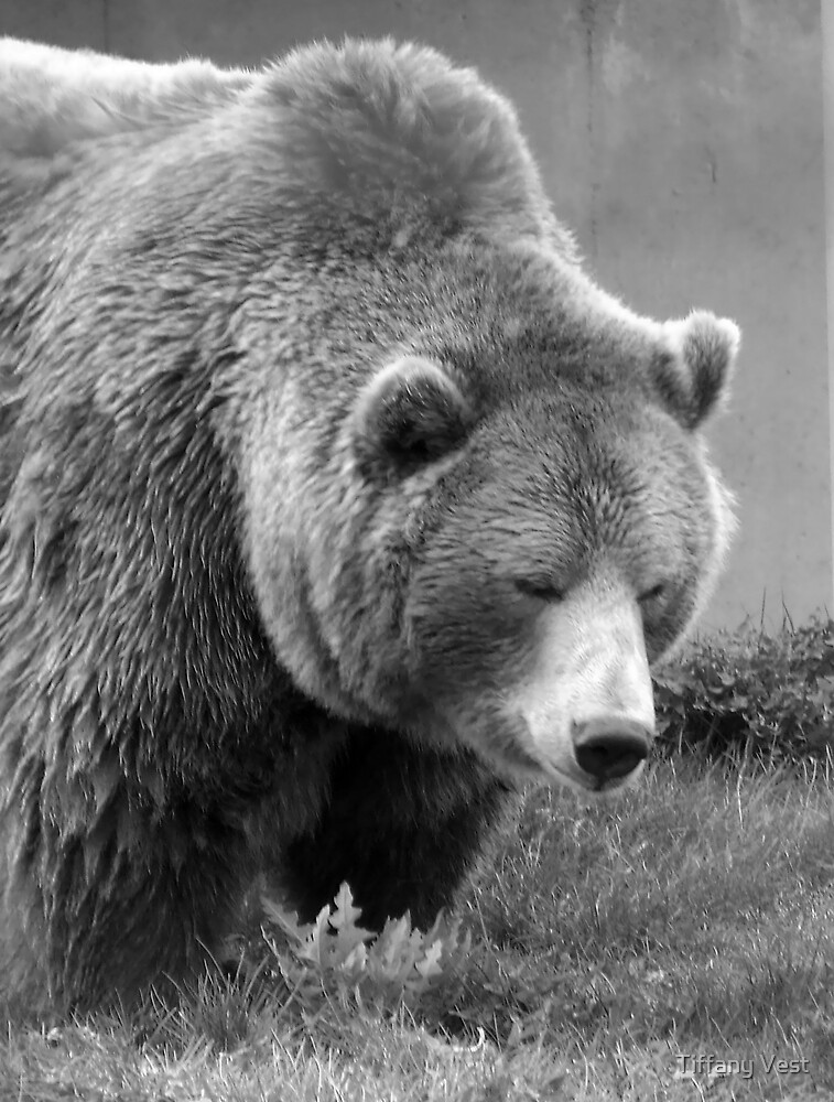 Grizzly Bear Black and White by Tiffany Vest