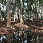 Eucalyptus Trees After the Rain by Lozzar Landscape