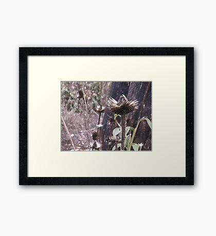 Beauty or The Beast Framed Print