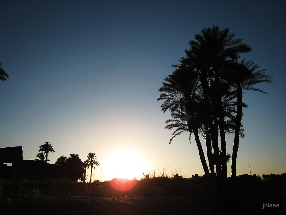 Palm Tree by jolaaa