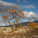 Nass Valley Lava Beds by PRboy