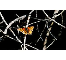 A Spot of Ragged Colour Photographic Print
